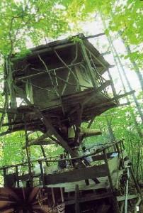 初代「樹の上の家」